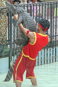 This isn't me. But - I have wrestled a gator before! Pretty foolish.